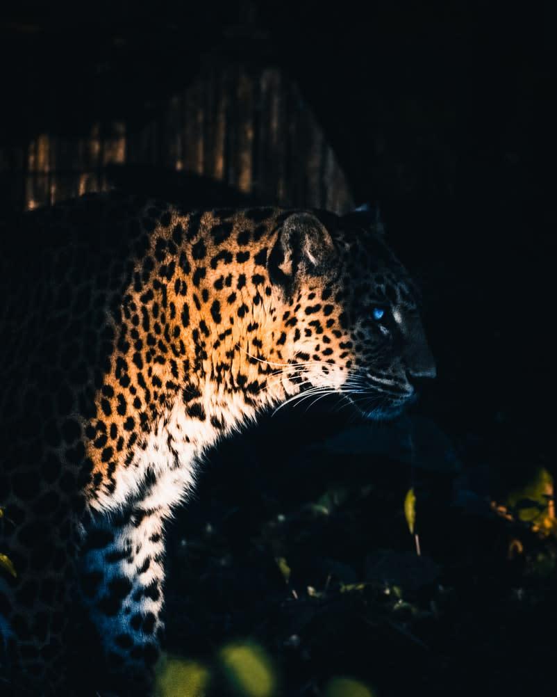Yggdrasil が ReelPlay と提携し、Bad Dingo から Jaguar SuperWays をリリース